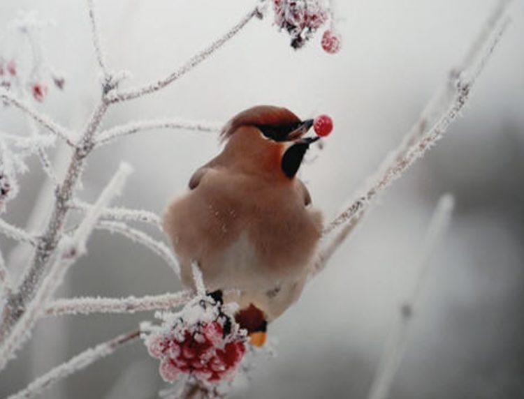 Les oiseaux sont une poésie.